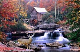 Moving Picture Autumn Mill with Deer and Waterfall -SML