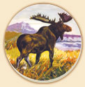 * A Moose in Meadow Cabin/Lodge 8 Coasters