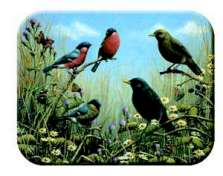 Glass Cuttingboard Serving Trivet Bird Songs Wildlife