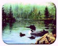 Loon Lake Cabin Lodge Wildlife Glass Cuttingboard Serving Tray