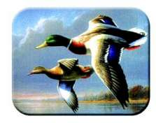 Mallard Cabin Lodge Wildlife Glass Cuttingboard Serving Tray