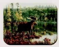 Cabin/Lodge/Wildlife Hautman Moose Cuttingboard/Server/Trivet