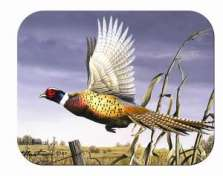 Pheasant Cabin Lodge Wildlife-Glass Cuttingboard Serving Tray